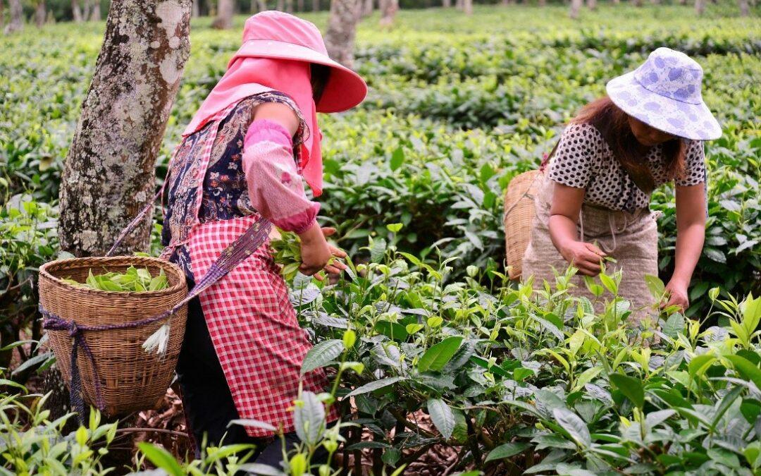 Día internacional de las mujeres rurales.